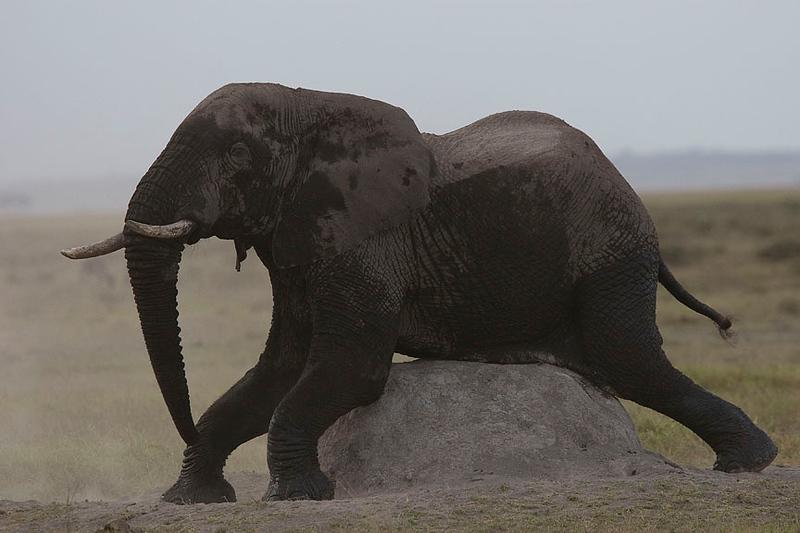 2007 07 19 Amboseli 218