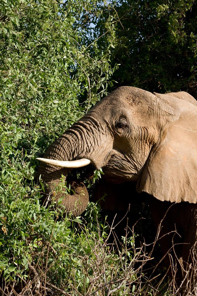 20100903_Samburu_303