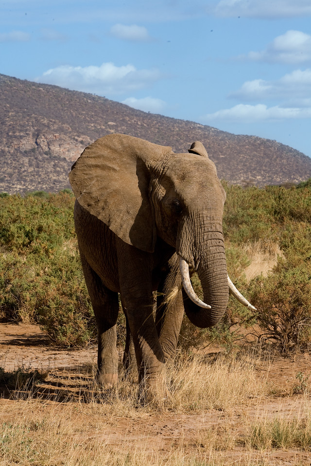 20100903_Samburu_426