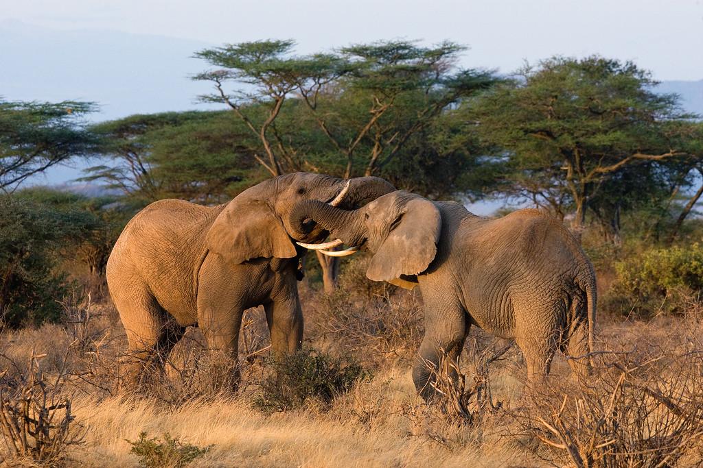 20100905_Samburu_015