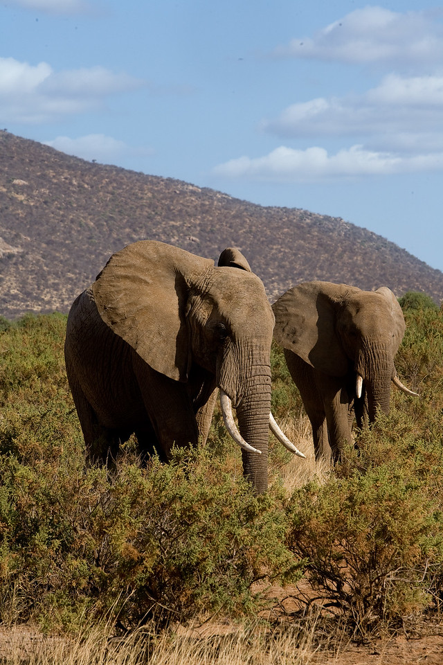 20100903_Samburu_410
