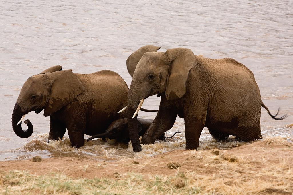 20100903_Samburu_0609