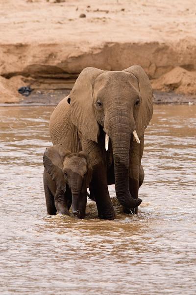 20100903_Samburu_0532