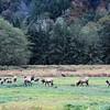 Elk family