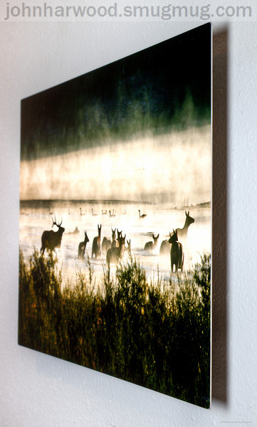Elk in the Mist Ready to hang Metal Print on the wall.