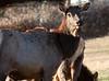 Elk, Benezette Pennsylvania