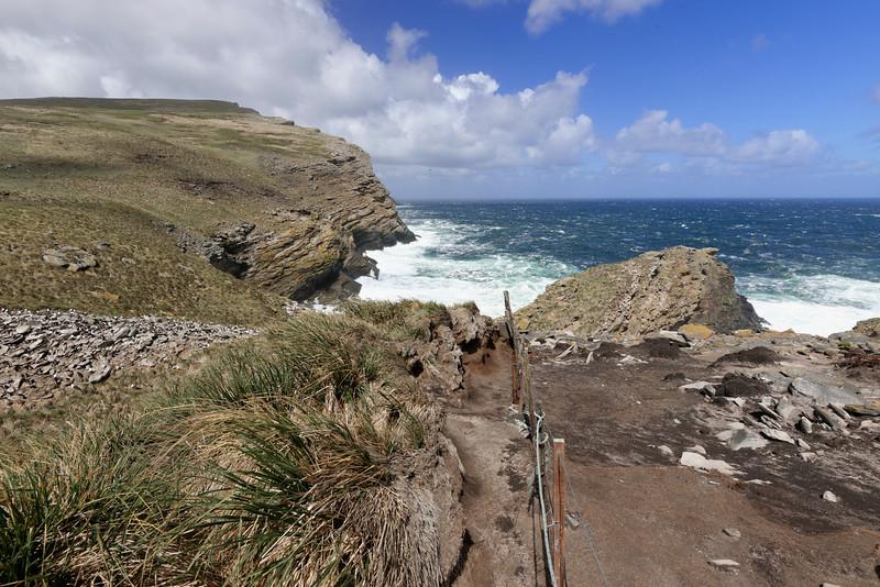 Albatross colony, Westpoint Island.