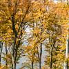 Wienerwald (Vienna Woods)
