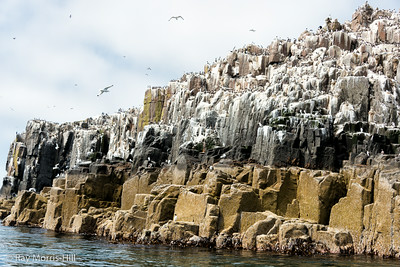 Outer Farne