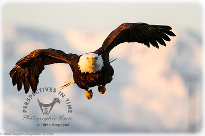 Homer Eagle - watch out!!