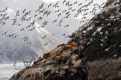 Seward - Rookery and Sea Lions