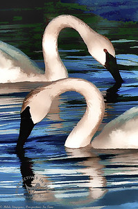 Swans - All Necks - digital paining