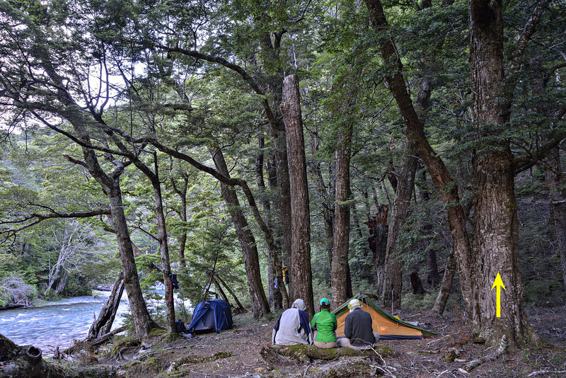 Campsite in silver beech (Nothofagus menziesii) forest next to the Caples River. The arrow indicates the tree where all of the following photographs were taken