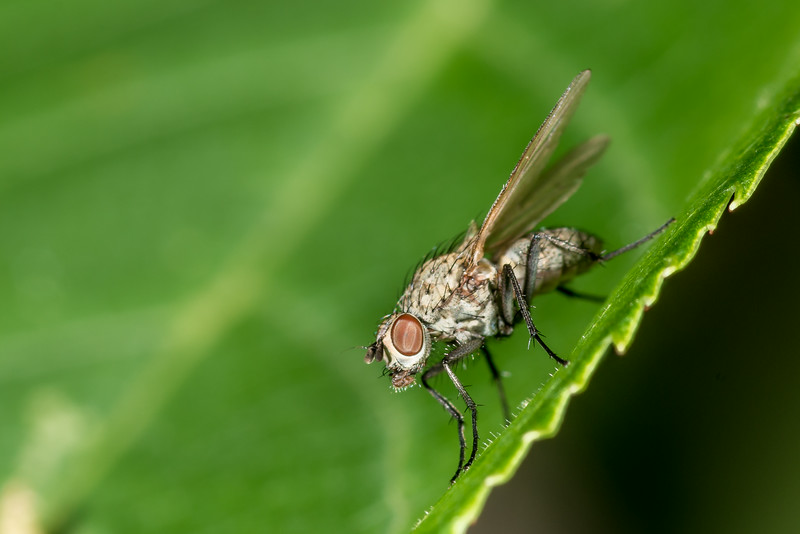 A very tiny fly of some sort. George H. Crosby - Manitou State Park, Minnesota