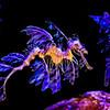 Leafy Dragon Sea Horse