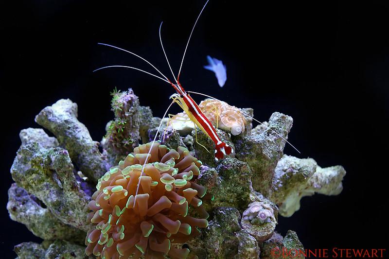 Reef inhabitants