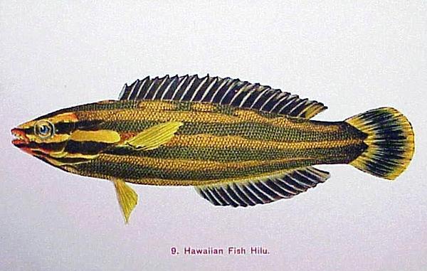 Hawaiian Fish Hilu