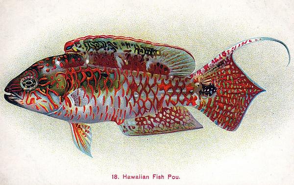 Hawaiian Fish Pou