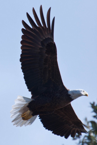 Eagles Nest in Kissimmee 01/08/11