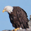 Eagles Nest in Kissimmee 12/29/10
