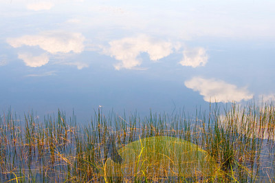 Blue sky and clouds is reflected in the shallow water of a Florida swamp.