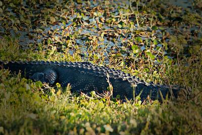 Florida Wetlands 2017