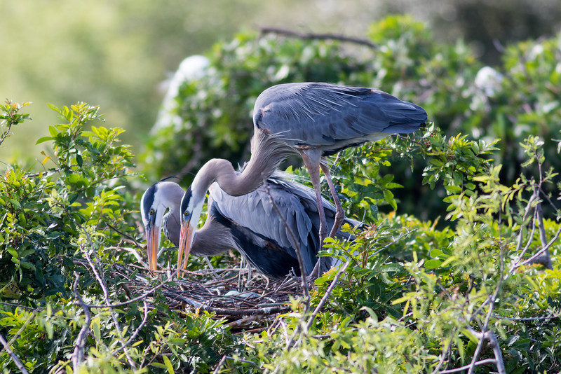 Tending to the Nest