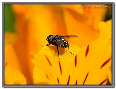 Insects and Flowers