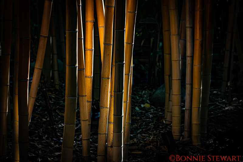 Sunbeam on the bamboo forest