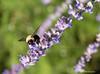 """Bumble Bee"""