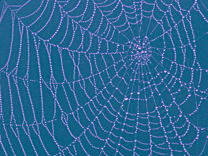 This is a close-up of the same web as in the previous photo, but with a bit of artistic license exercised.