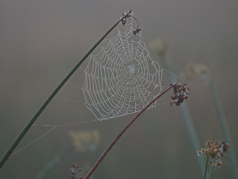 The fog created a pearlescent spider web that was absolutely beautiful. It took a while for it to settle down as any little whiff of moving air moved this web around as if it were jelly.