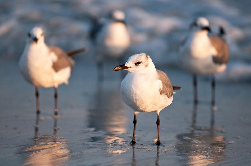 All Gull Band