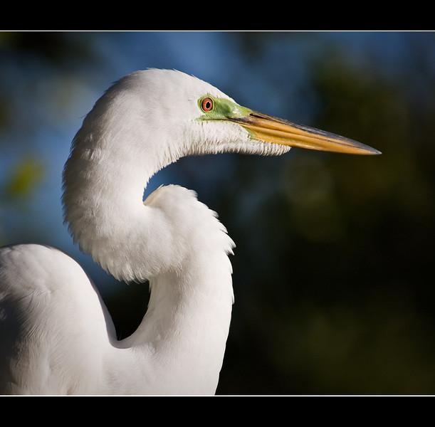 S-curve-y Egret