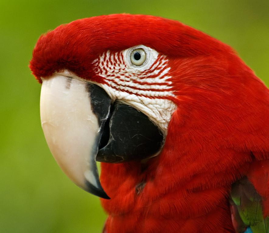. . . redhead