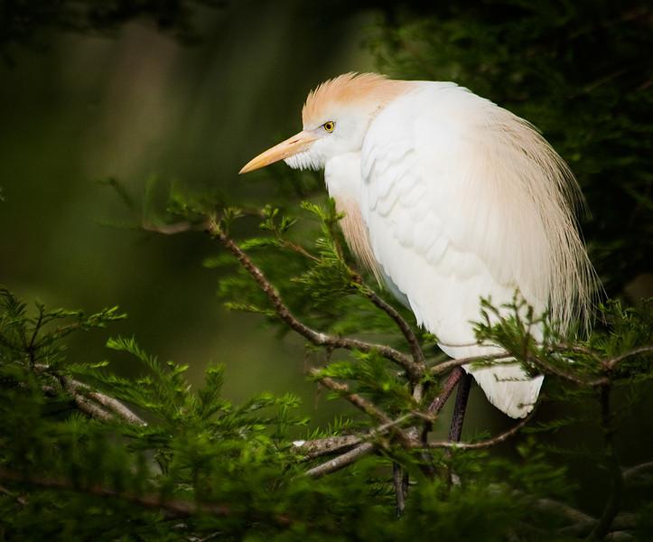 A Bird in the Bush . . .