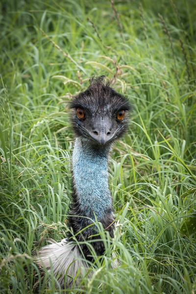 """""""Emu Eyes"""""""