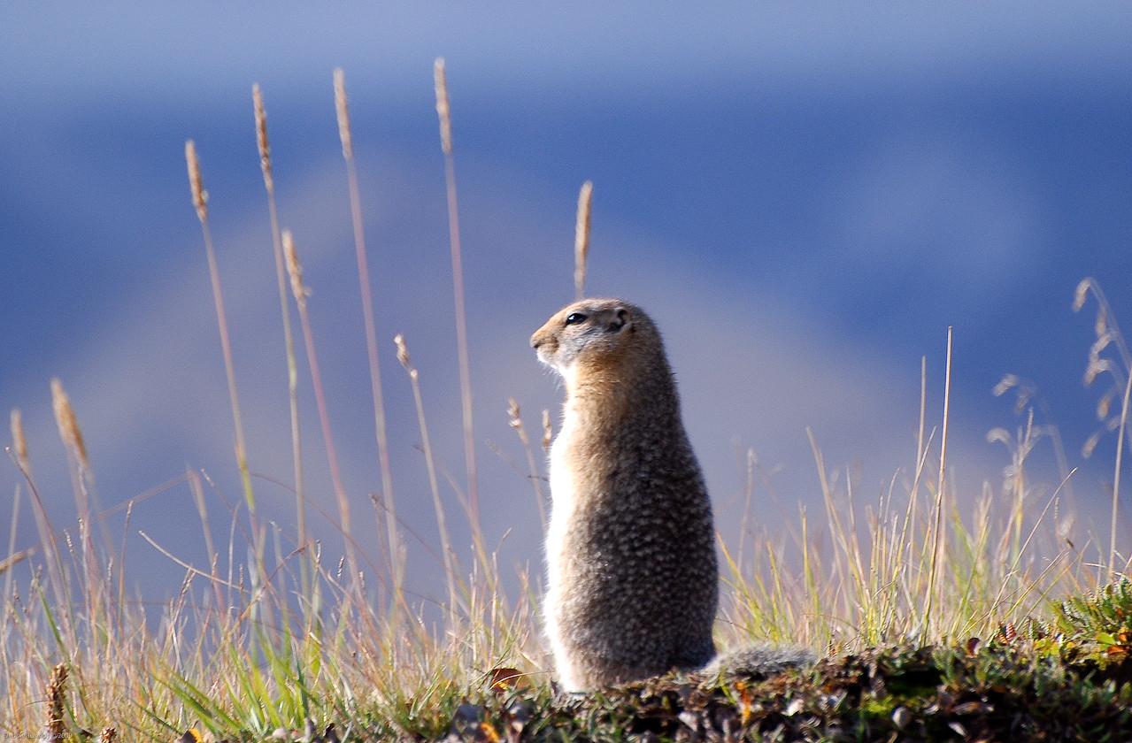 Denali National Park Alaska © 2008