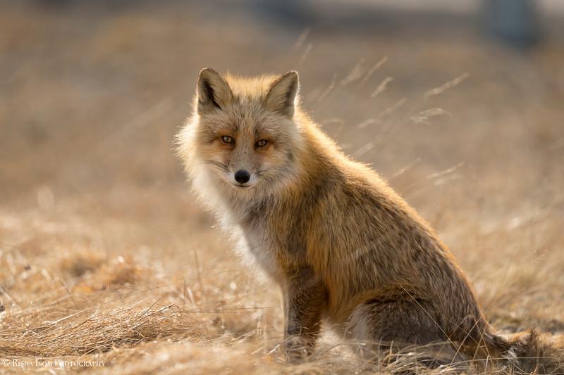 Rule of Thirds- Fox