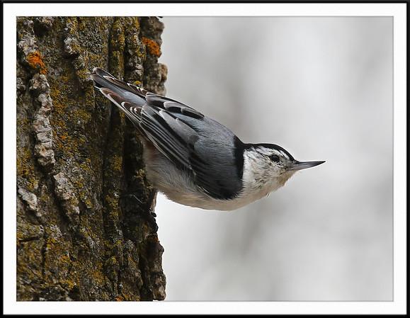 Framed Bird Photos