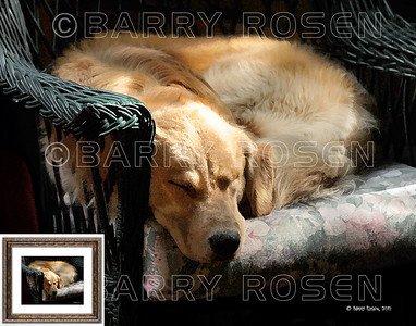 It's Snoozin' Time Again M10_0223 art print framed