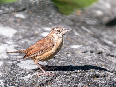 Frederick Birds 15 September 2017-7631