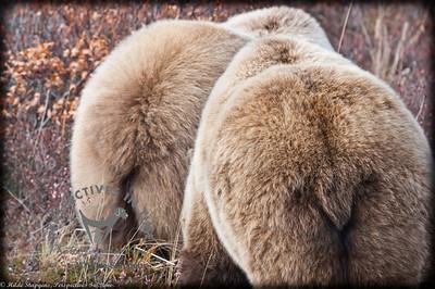 Brown Bear Butts