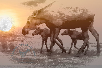 Moose cow with twin calves - digital painting