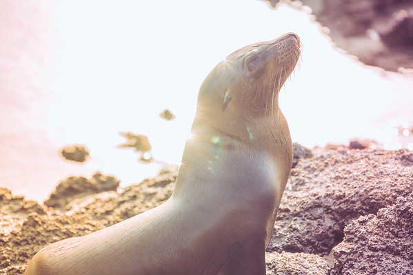 Galapagos sea lion pup enjoying a sunny afternoon.