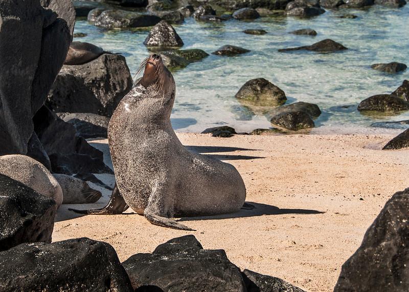 Espanola - Sea Lion