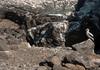 Espanola - Nazca Booby