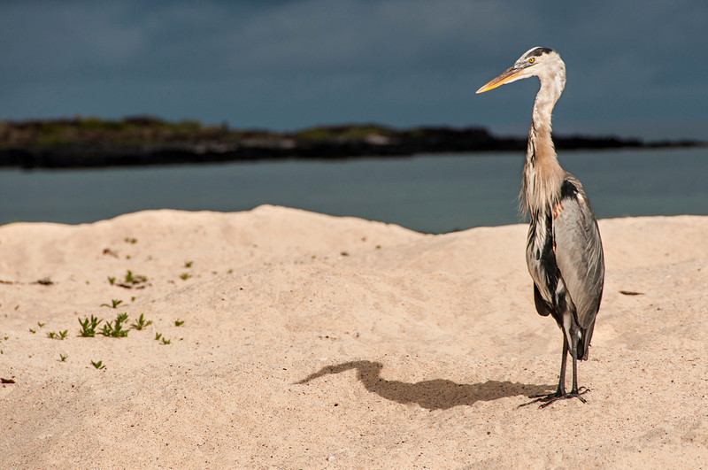 Heron on Bachas Beach
