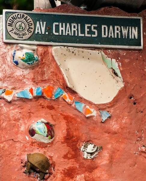 Day 7 Santa Cruz & the town of Puerto Ayora, Charles Darwin Rese