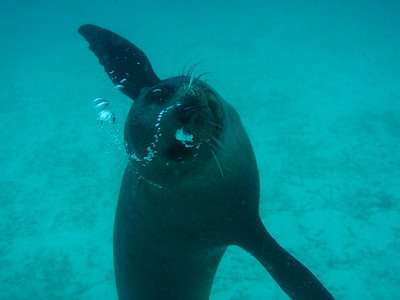2005.09 Galapagos
